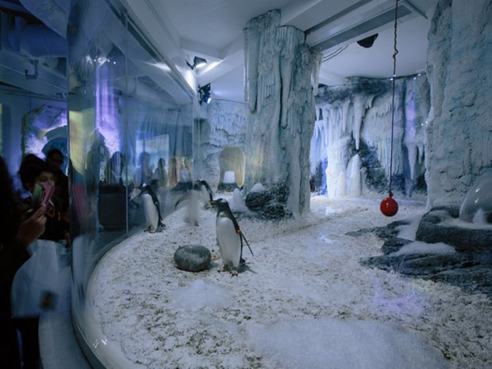 Sea Life London Relies On Cameo Flat Pro Series In Penguin Point